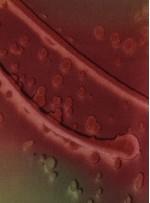 Islanmış Çiçek Desenli Yeşil İpek Emprime Saten Kumaş - K275